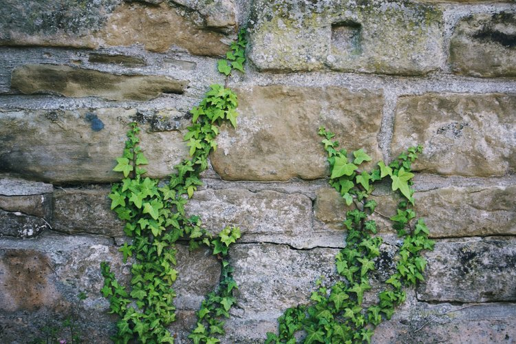 Hitting your wall, looking after your health and wellbeing.